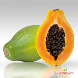 Papaia, Papaya, Papayón, Olocotón, Papayo, Lechoza, Frutabomba 1,5k